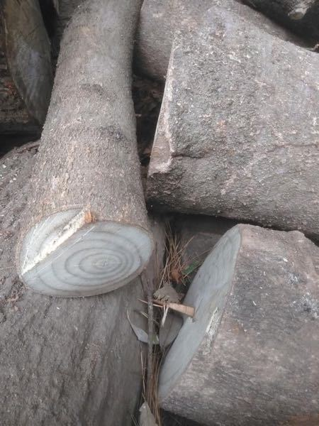 これは何の木でしょうか?