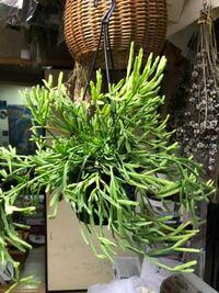 この植物はなんという名前でしょうか。 花屋さんで急いで買ってきて、名前を聞くのをわすれてしまいました。
