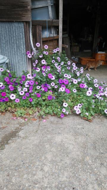 この花の種類は、何ですか