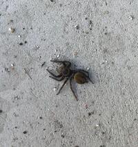 蜘蛛の種類 写真のクモについて 種類が分かる方、ご教示ください。  昨日福岡県で撮影したものです。