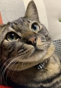 猫の目の色  この猫ちゃんの目の色は何色というのでしょうか?グリーン?ゴールド?  詳しい方お願いします!