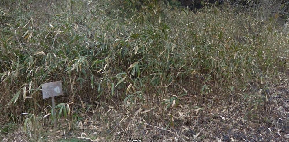 どこにでもあるこの竹は何という名前でしょうか? また、この竹を何年も放置した場所に、高さ2.5mくらいのこの竹につる植物が複雑に絡み合っているところがどうにもこうにもキレイにできません。 草刈...
