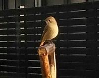 小鳥の名前を教えて下さい、 岐阜県美濃加茂市で、 撮影200213