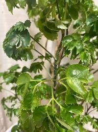 観葉植物の種類が分からなくなってしまいまして、葉っぱで何か分かりますか?