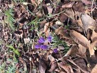 もう一つ質問します。 この花の名前も教えてください。 よろしくお願いします。