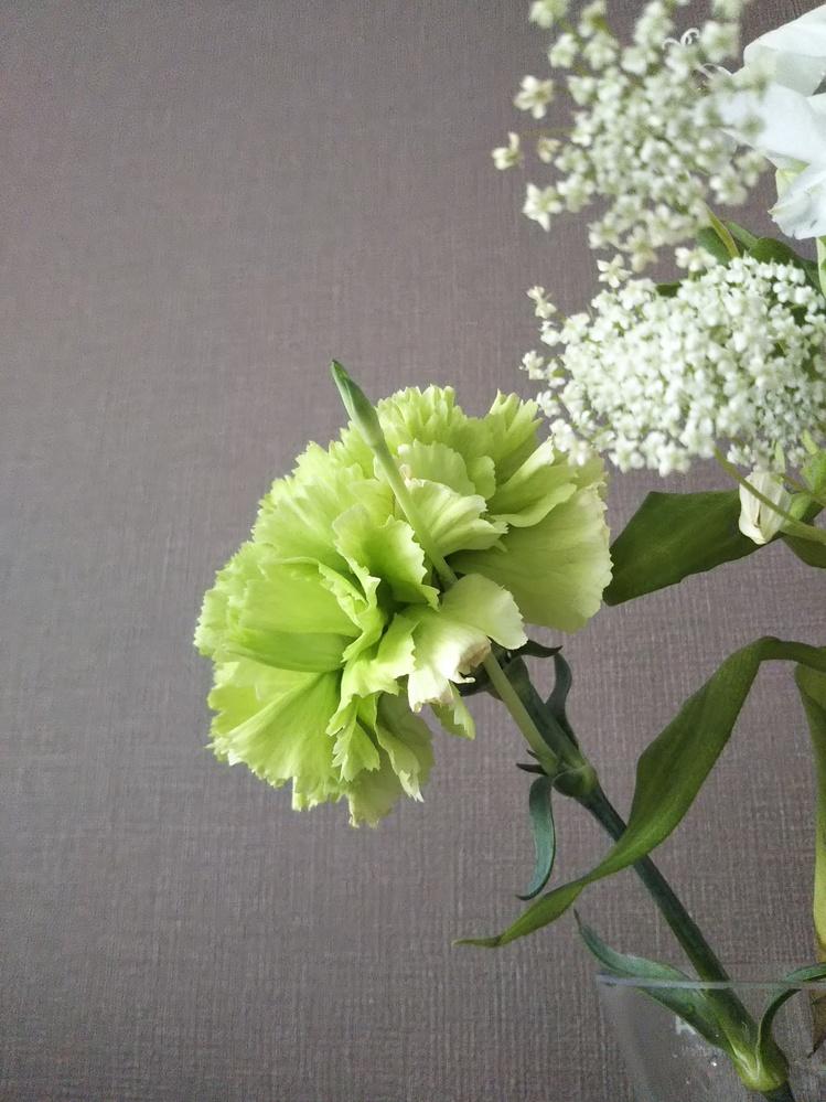 2週間ほど前にもらって以来飾ってたカーネーションから、新しい茎?がはえてきました。 ぴょこんと伸びてるのは茎ですか??