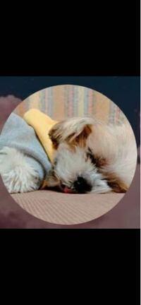 この犬って犬種なんだと思いますか??