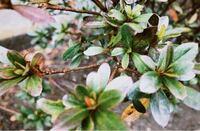 この植物の名前を教えてください!!! (写真はこれしかないです)