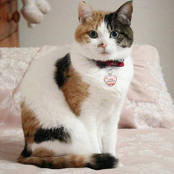 (-o-)/ 【猫画像】三毛猫 なにかタイトルを付けてください