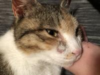 猫の右目のしたに円形脱毛みたいなものがあり本日病院に行ったのですが結膜炎と言われ目薬を処方されました。 結膜炎で目の下が脱毛するものなんのですか?
