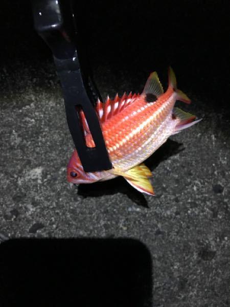 魚の名前を教えて欲しいです つりに来ていて、堤防で鯛に似たような魚が釣れたのですがこの魚はなんと言うのでしょうか? また、毒などの危険性はありませんか?