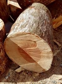 樹種に詳しい方お願いします。 薪ストーブ用に原木で購入しましたが、硬く、詰まっていて斧では割れそうにありません。 この樹種を教えて下さい。