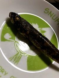 この魚の種類わかる方いますか? 教えて欲しいです。八代の前川付近(有明海のそば)で釣りました。何かわからなかったけどとりあえず焼いて食いました。味は普通でした。