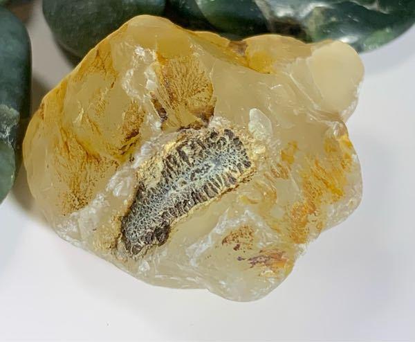 このメノウ?についてる物が何が教えてください。 なんか気持ち悪いけど、化石のように見えなくもなくて 捨ててしまおうかどうか迷っています。 これは化石でしょうか? 化石だとしたら何の化石か教えてく...
