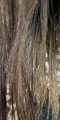 これ髪の毛痛みすぎですよね