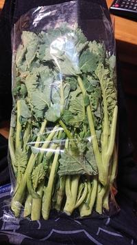 これはなんの菜っ葉でしょうか?もらったんですがなにかわからず…