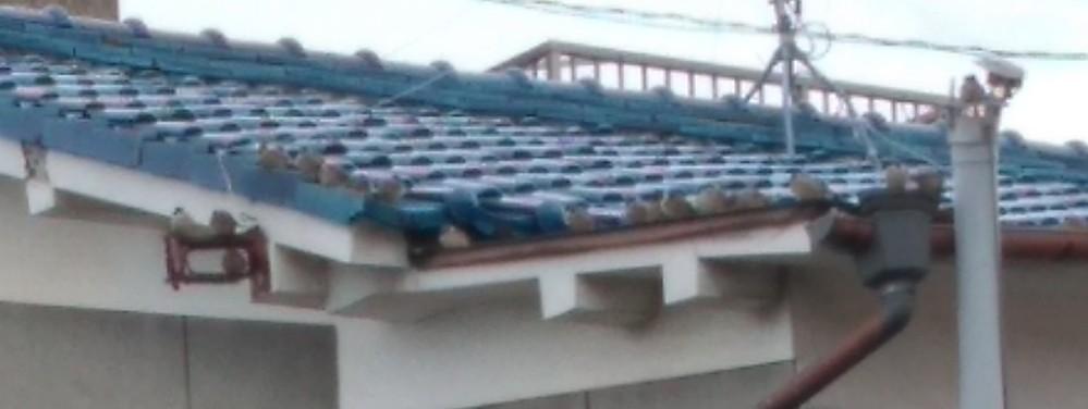 これヒヨドリの群れですかね? スマホの写真なんで酷い映りですが。