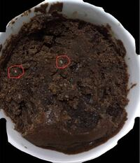 ガトーショコラを作ったのですが、中に変な白いつぶつぶの様なものがありました。 食べてみてもすぐに口の中で溶けて、変な味もしないのでカビではないのかなと思っているのですが、これは何なのでしょうか? (写真に丸をつけた少し大きめのものや、下の 方にある細かいものもあります。)  ちなみに材料は 板チョコ、無塩バター、卵、砂糖、薄力粉です。