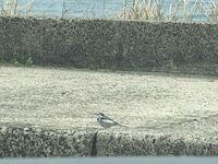 この鳥さん、なんて名前ですか? すごく可愛らしいので知りたいです〜