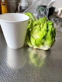 この野菜は何ですか? ふきのとう? 握りこぶしくらいの大きさで 裏を見ると底の部分は空洞です。 ネット画像のふきのとうとは違うみたいだし、、 貰い物で調理したいけど何かわからず どう食べたらいいのやら。