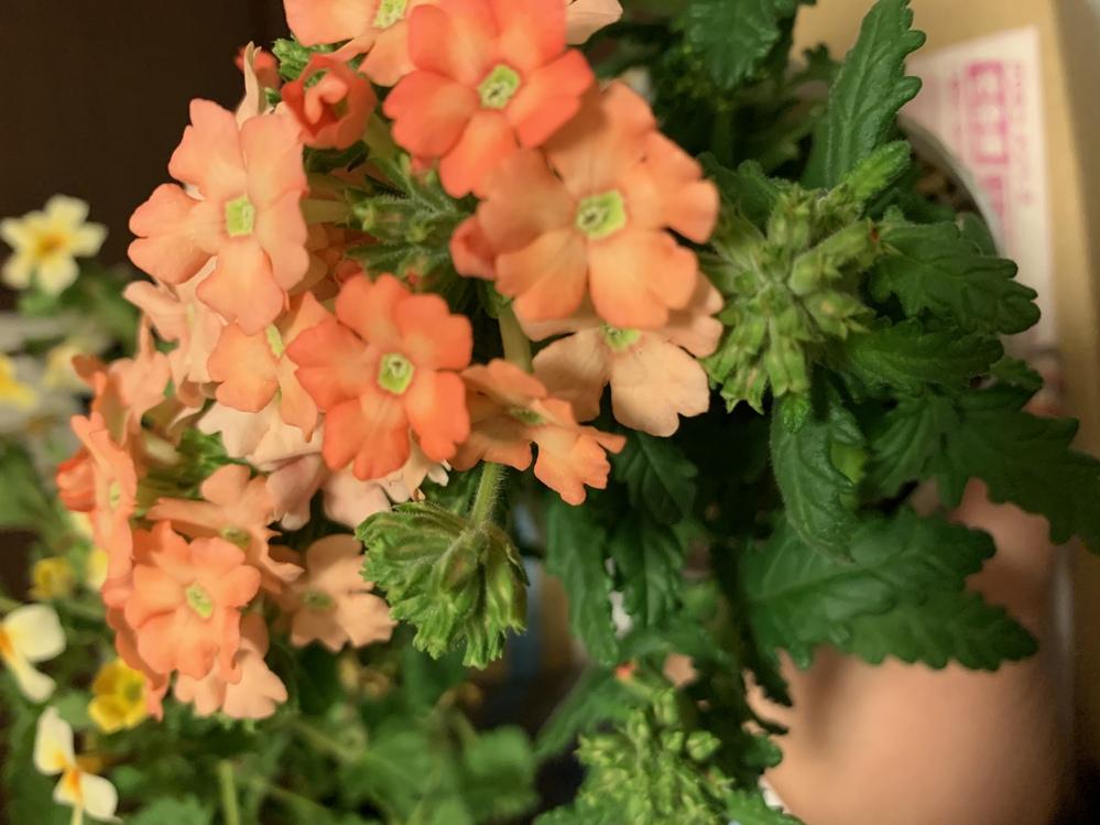 このお花ってなんて名前が分かれば教えてください。
