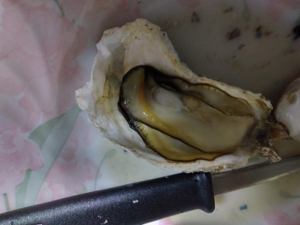 牡蠣について 牡蠣を殻が閉じている状態から蒸し焼きにしました。 どれも苦味があります。 色も黄色から茶色に変色しています。 これは、どうしてでしょうか。