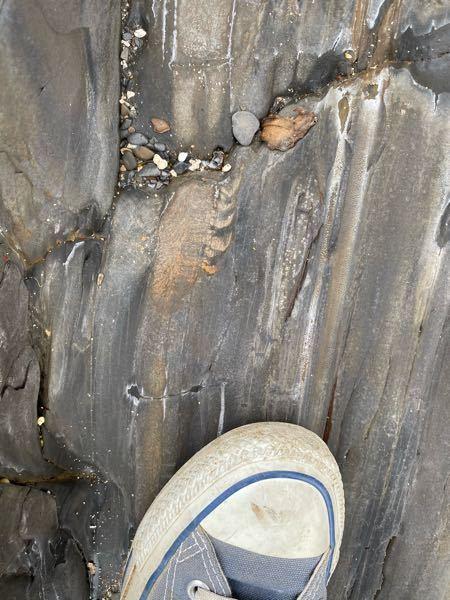 磯歩きしていたら、岩に何か太古の生物の痕跡?のようなものを見つけました。考古学に詳しい方、何という生き物かわかる方おられますか?気になりまして^ ^