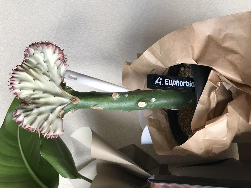 こちらの植物の名前が知りたいです。 ご存知の方がおられましたら 教えて頂きたいです。 宜しくお願い致します。