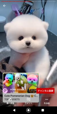 この犬は何て犬種ですか?