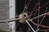 この巣は、何と言う虫の巣でしょうか 教えてください。 兵庫県で、3月にこの巣を見つけました。