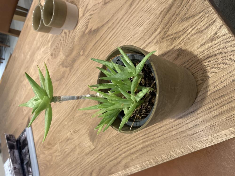 この観葉植物の名前を教えてください!