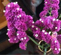 この紫のお花の名前を知っている方いますか? 教えてください!