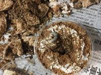 コクワガタの幼虫を今年初めて育てています。9月20日頃割り出して10月始めに菌糸カップに移しました。 12月20日頃に食痕が目立ってきたので新しい菌糸カップに移しました。役3ヶ月が経ち幼虫も大きくなってきたと思いますが蛹になるのはまだ先でしょうか?食痕も出てきたのでもう菌糸カップではキツいかなと…これから菌糸ビンに移すのは大丈夫でしょうか?掘り出して蛹室を作っていたらどうしようと思うと勇気が...