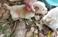 犬種わかる方いますか?    捨てられていた子犬です。  雑種でしょうか?  詳しい方がいらっしゃいましたら、教えて頂きたいです。