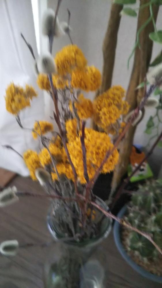この黄色のドライフラワーはなんの花ですか?