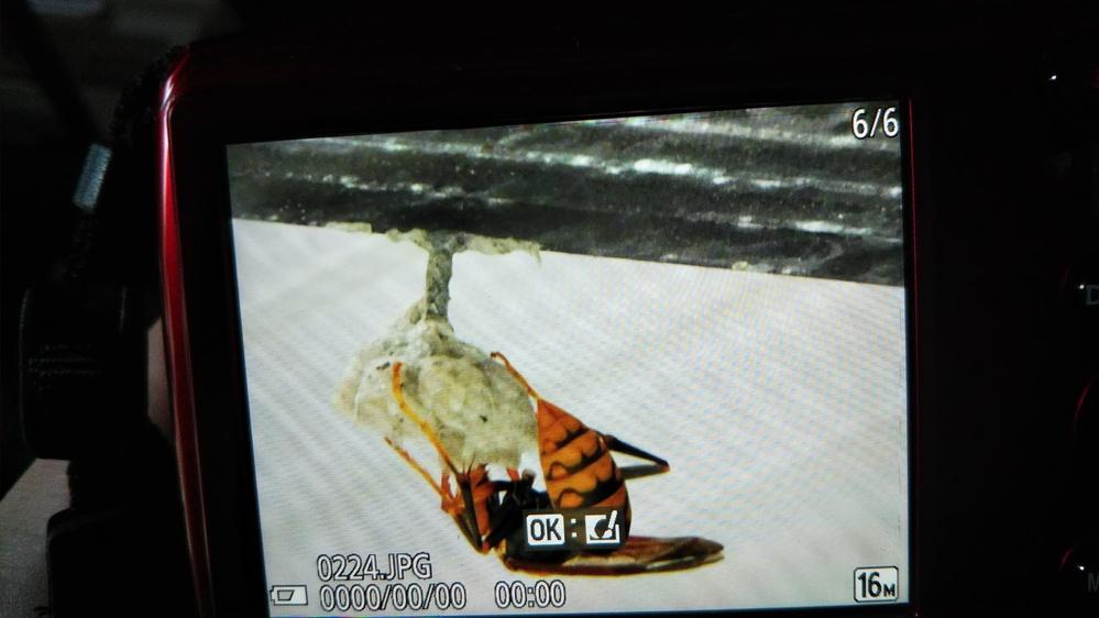 蜂と巣の駆除方法を教えてください。 蜂が居なくなったタイミングで、スプレーをかけたり、巣を壊し