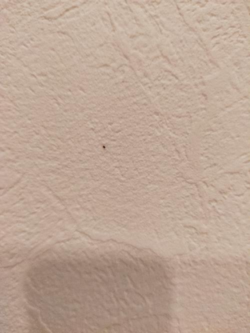 引越し先に出る小さい虫について。 すごく小さい虫が壁や床をはっていて、管理会社の方に見てもらったら、ダニじゃないかって言われました。 けっこうな数いました。 そしてクモもいて、クモのフンなのかダニのフンなのかんからないけれど、黒い粒が所々落ちています。 いま、服やレトルトなどの日用品を少しずつ運び込んでて、だいぶ収まってきたとこなので、バル〇〇をするべきか悩んでます。 そして、そういった殺...