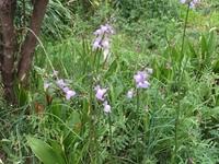 この花(雑草っぽいですが)の名前を教えてください。宜しくお願いいたします。