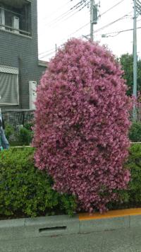 植物にお詳しい方、お付き合い下さい。 このお花は、何と言うお花でしょうか? 教えて下さる方、是非、宜しくお願い致します。