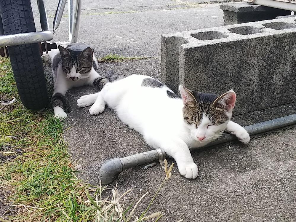この猫たちは、リラックスしているでしょうか。