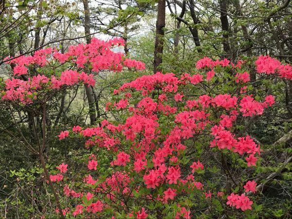 この花はなんの花ですか?