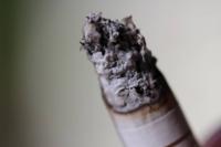先程犬がタバコの灰を食べてしまいました。 どのように対処すれば良いですか? 食べた量は画像くらいです。