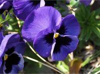 この花はなんという花で花言葉はなんですか?