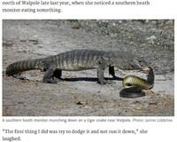 何故ヘビは猛毒があっても相手より長くても、トカゲに瞬殺されるほど弱いのでしょうか?