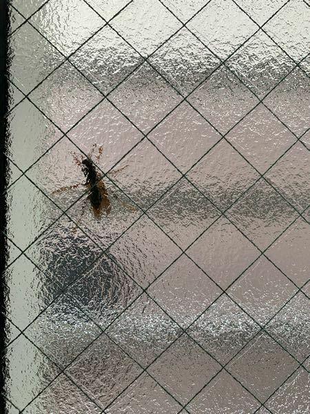 キッチンの窓の外側にでかめの虫がいるんですけど、なんの虫だかわかる方いらっしゃいますか? (すりガラスごしなので難しいかもしれませんが...) 窓を叩くと羽とお尻を動かしているように見えます。 2時間くらいずっといて、内側から窓を叩いても向きを変えるだけです。(外側からこの窓には近づけません) 殺虫剤をかけようにも窓を開けると家の中に入ってしまう位置にいるので手が出せない状態です。 この...