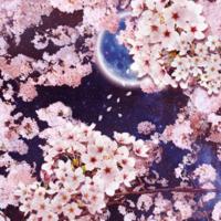 皆さん夜桜は好きですか?