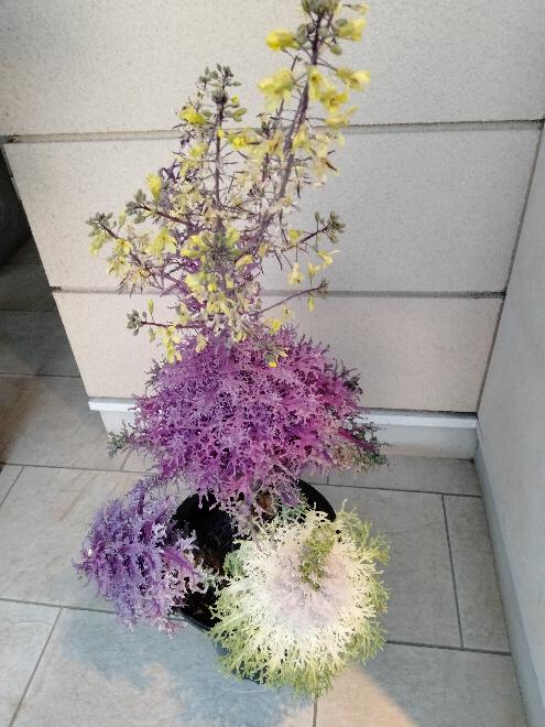この植物は何という名前ですか?