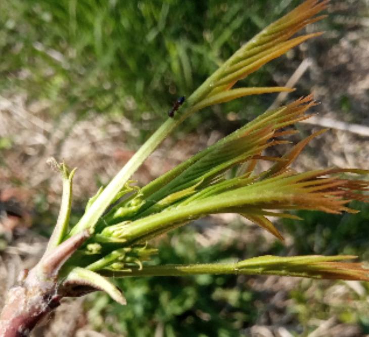 この植物はなんでしたっけ?