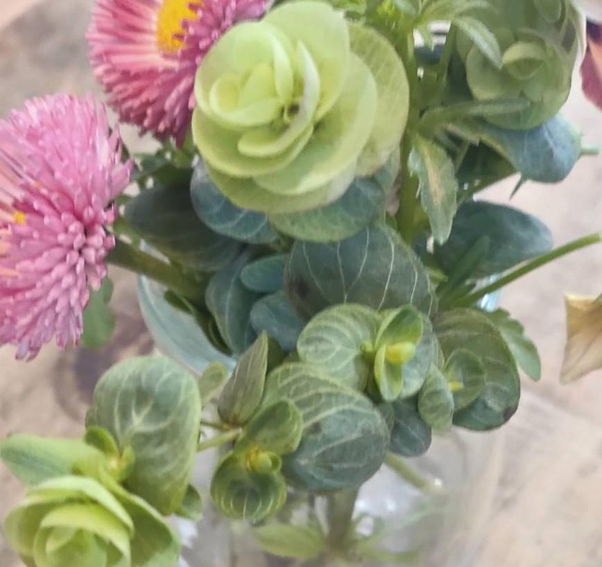 こちらの植物の名前を教えて頂きたく。 写真にはないですが 穂先?に紫いろのお花をつけます。
