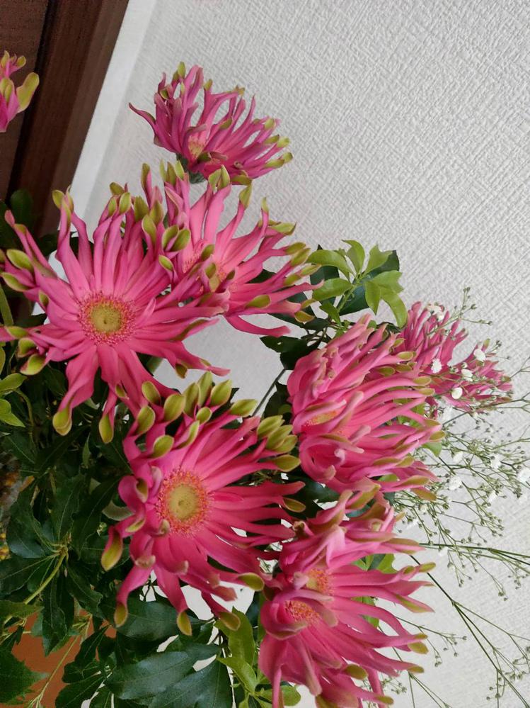 この写真のピンク色のお花の名前がわかりますか? ガーベラの品種改良されたものでしょうか。 商品名などがあれば知りたいです。 よろしくお願いいたします。